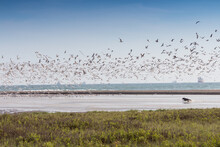 Seagulls Flying Over Sea Against Clear Sky