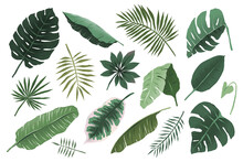 Tropical Leaves Collection, Monstera Plant Branch And Fan Palm Leaf, Various Hand Drawn Exotic Foliage Illustration, Trendy Tropic Greenery, Isolated Vector Objects, Detailed Boho Drawing