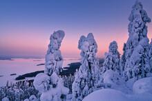 Sunset In National Park Koli Winter Finnish Landscape
