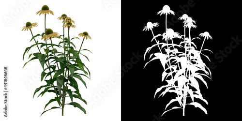 Fotografering Front view of Echinacea Purpurea Plant PNG with alpha channel to cutout