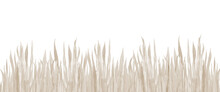 Dry Grass Banner. Watercolor Background. Beige Field Plants. Watercolour Toned Illustration On White Background.