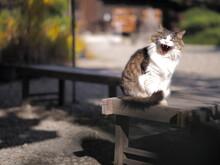 大あくびをする猫