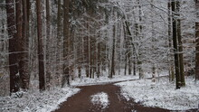 Waldweg Kreuzung