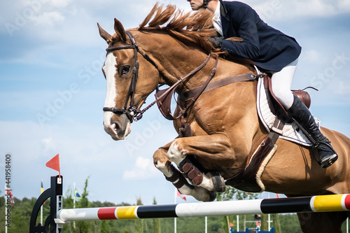 Vászonkép Equestrian Sports photo themed: Horse jumping, Show Jumping, Horse riding compet