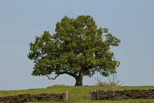 A Lone Tree Stands Out Against The Sky At The Top Of A Hill Overlooking Dowley Gap At Bingley In Yorkshire