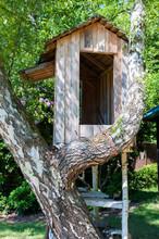 Baumhaus In Einer Verzweigten Birke, Kleines Spielhaus In Luftiger Höhe In Einem Garten