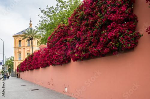 Fotografija View of the street in Seville