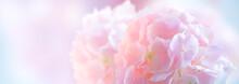 Hydrangea Pink Flower Closeup. Beautiful Soft Colors Hortensia Art Design. Beauty Pink Colour Hydrangea Flower Close Up. Watercolor Nature Floral Backdrop. Easter, Birthday, Nature Border Design.
