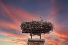 A White Stork Sits On A Nest On A Chimney And Has A Young Next To It. In The Background Is A Dramatic Sky.