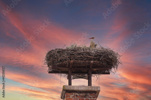 Foto A white stork sits on a nest on a chimney and has a young next to it