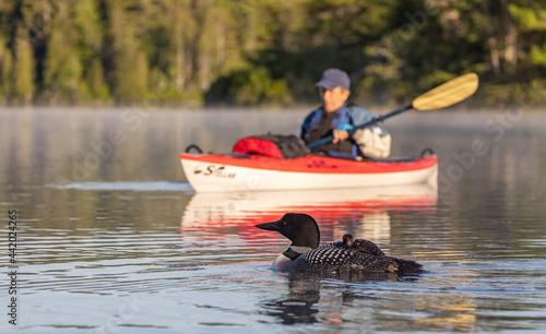 Obraz na plátně A kayaker at sunrise with a loon