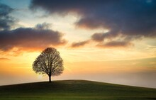 Lone Tree In Sunset