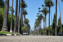 The Famous Palm Tree Street In Beverly Hills, Between North Santa Monica Boulevard And Sunset Boulevard Avenues, Los Angeles, California
