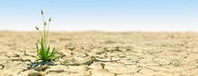 Single Plant Growing During An Extreme Drought Concept That Life Carries On 3d Render