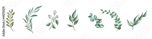 Photo Vector set botanical elements - wildflowers, herbs and wild foliage