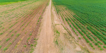 View From Drone At Country At Nakhonratchasima,Farm Cassava