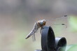 Ważka ,owad ,owad siedzący ,owad drapieżny