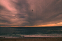 Seagull Flying Under A Turbulent Sky Over The Sea At Sunset.