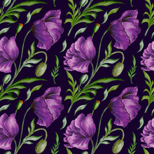Digital Watercolour Seamless Pattern With Purple Wild Poppies, Poppy Seedpods, Buds And Green Leaves On The Dark Background. Colourful Endless Pattern For Textile Or Wrapping Paper.