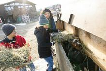Family Feeding Hay To Goats On Sunny Farm