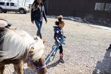 Girl Walking Shetland Pony On Sunny Farm
