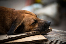 In The Historic City Of Cachoeira, Bahia, Brazil, The Dog Rests On Top Of An Old Car.