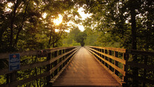 Narrow Wooden Footbridge Through Forest Trees At Sunset