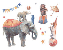 Watercolor Circus Set. Hand Drawn Illustrations: Trained Dog And Monkey, Elephant Pyramid, Flags Garland And Other Trick Accesorises. Isolated Retro Objects