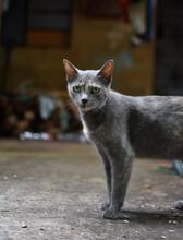Hermoso Gato Gris Mirando Fijamente