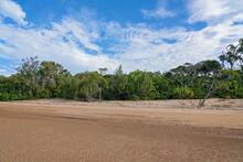 Native Vegetation On A Sandy Beach