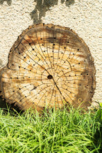 Cut Of The Trunk Of An Old Tree With Annual Rings