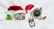 Funny Kitten And Tiny Pug Puppy Wearing Santa Hats Sleep Together With Gift Box Under A White Blanket On A Bed At Home. Pug Puppy Holds Alarm Clock. Top Down View