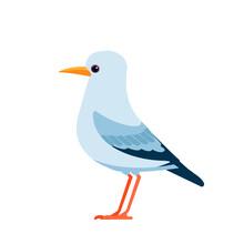 Gull Or Seagulls Are Seabirds Of The Family Laridae. Seabirds Cartoon Flat Vector Illustration Isolated On White Background
