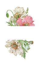 Watercolor Beautiful Pink And Beige Flowers Frame. Poppies Template. Hand-drawn Illustration.