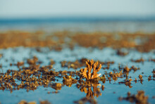Low Tide Sea Scape With Corals And Seaweed On Stones
