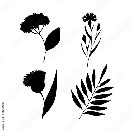 Set with wild plants black silhouettes Fototapet