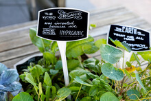 Hand Written Signs In Soil Of Organic Garden Plants