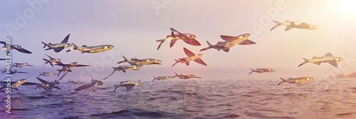 Fotografie, Obraz flying fish, school of Exocoetidae