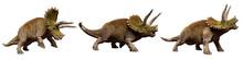 Triceratops Horridus Dinosaurs, Set Isolated On White Background