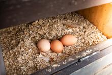 Fresh Eggs In A Nesting Box