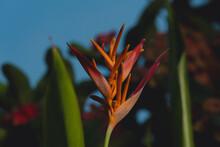 Flor Del Paraíso