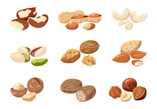 Nut. Cartoon Cashew And Peanut With Shells. Natural Nutmeg Or Macadamia. Delicious Walnut And Almond. Food Products Set. Vegan Snacks. Organic Ingredients. Vector Healthy Nutrition