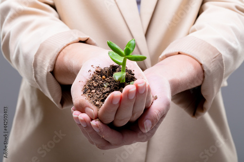 Midsection of caucasian businesswoman holding plant seedling, isolated on grey background