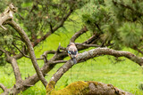 Small colorful bird in the park. Nature background.