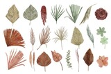 collection of dried floral watercolor illustration