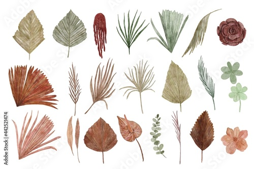 Fotografie, Obraz collection of dried floral watercolor illustration