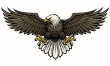 Hand Drawn Bald Eagle Spreading The Wings