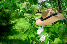 Photo Of A Hat On A Branch In A Green Garden