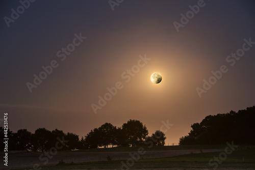 leuchtender großer Vollmond über dunkler Baumsilhouette