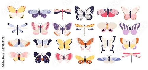 Vászonkép Cute butterflies